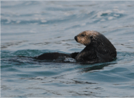 seal for mammal class